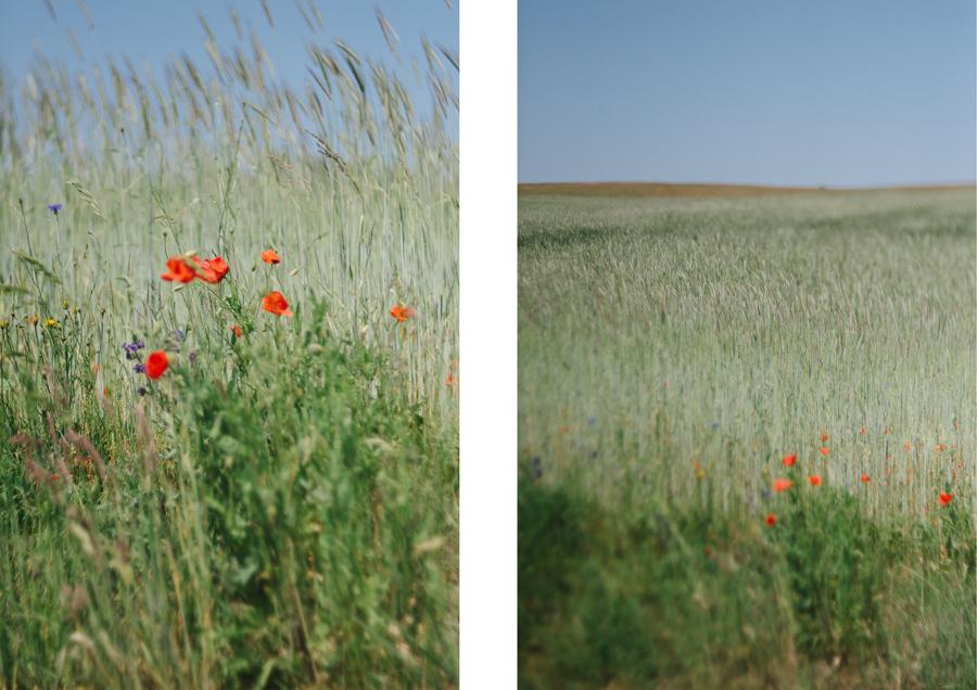 Ruegen, Urlaub, Hochzeit, Fotograf, Kathrin Stahl052